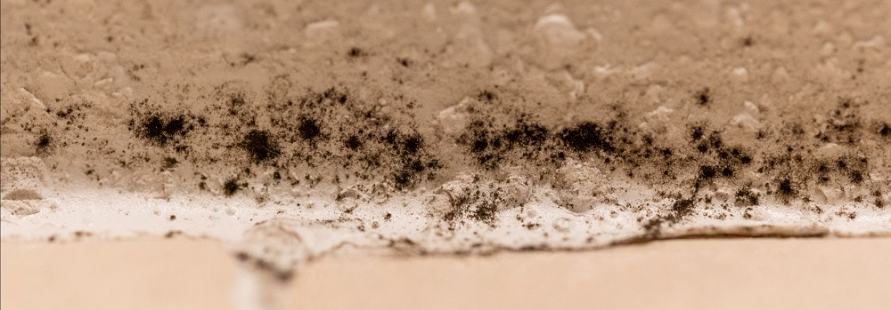 Removing Black Mold