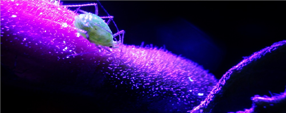 Can UV Light Kill Coronavirus?